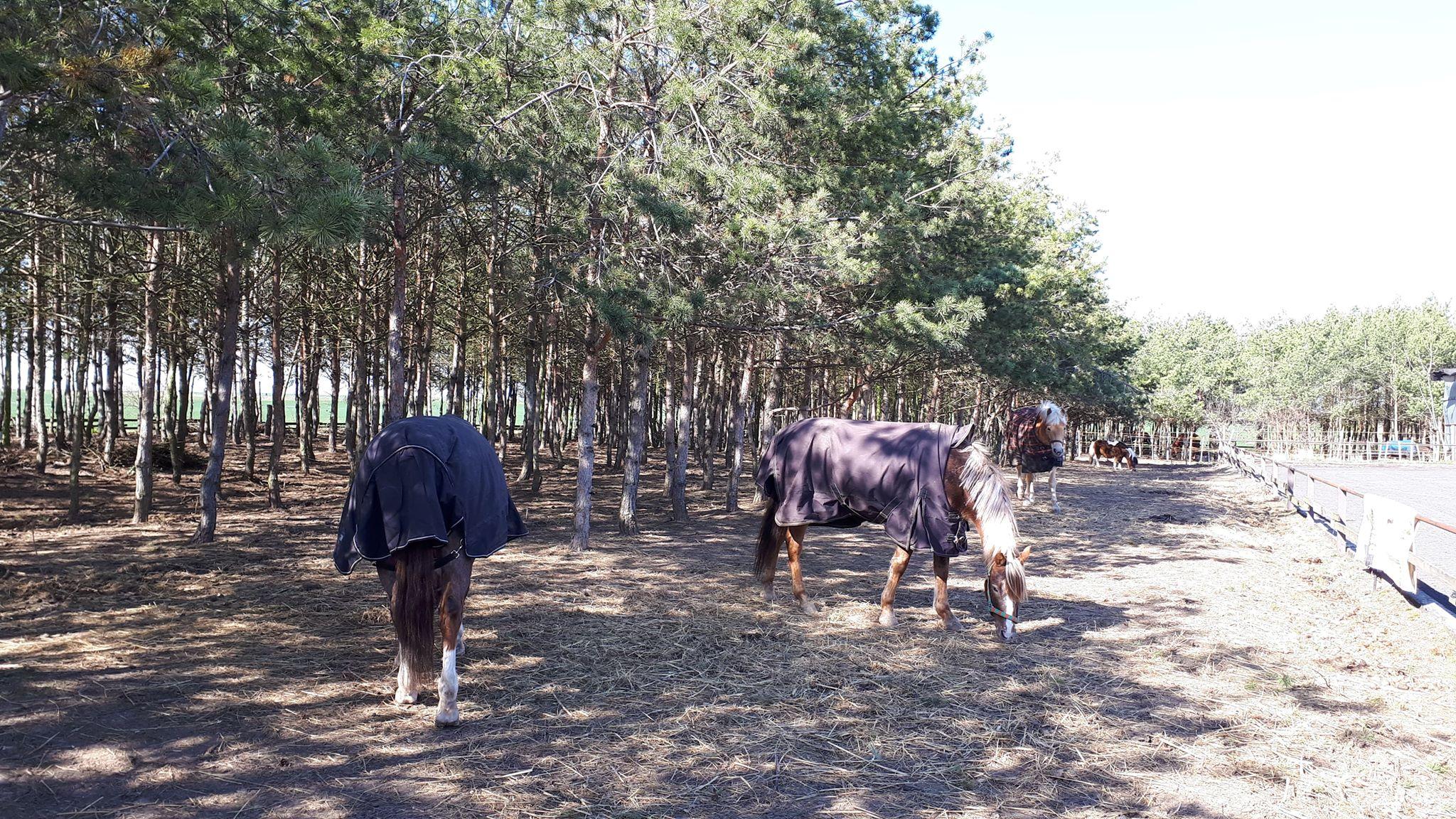 foto vybeh pony